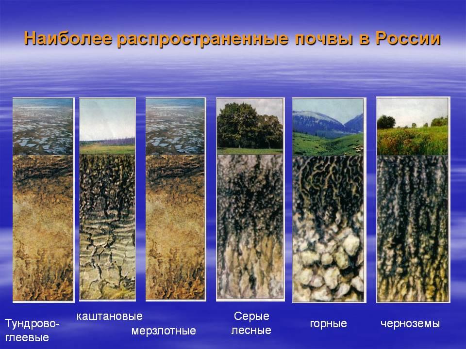 Почвы в России